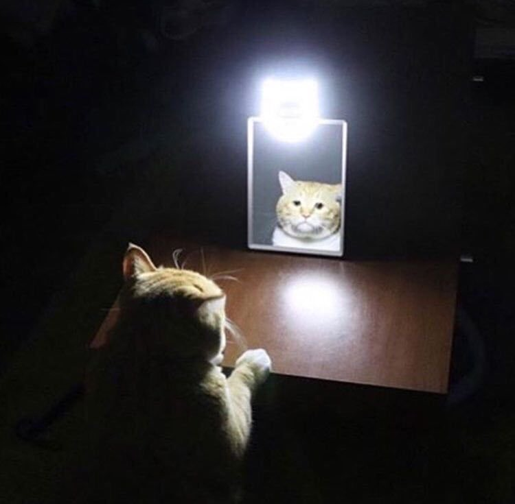 me at 3am trying to figure out why I exist