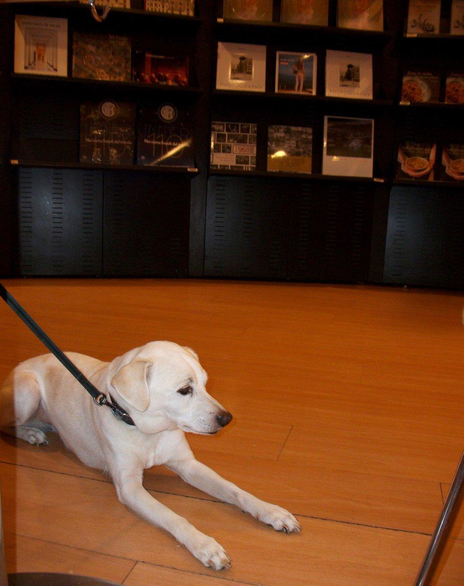 Tutti al fresco alla Feltrinelli, air conditioned, books, music and ice coffee Cream!!!shfuuuuuFFF !!! #lafeltrinelli #BookLoversDay #Aircondition_freak #dogs #dogsoftwitter  - Ukustom