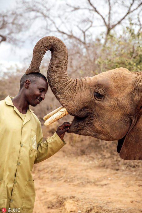 Calling your help on conserving and protecting the elephants! Today marks the #WorldElephantDay of 2018. The inaugural World Elephant Day was initiated on August 12, 2012, to bring attention to the urgent plight of Asian and African elephants. Photo