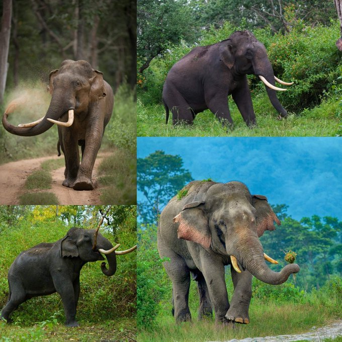 In The Jungle Book, Bagheera instructs Mowgli to bow as Elephants were crossing tells Mowgli that Elephants are the creators of the forest. On #WorldElephantDay, join hands to protect the gentle giants. Even the largest land animals deserve hugs. @deespeak Photo