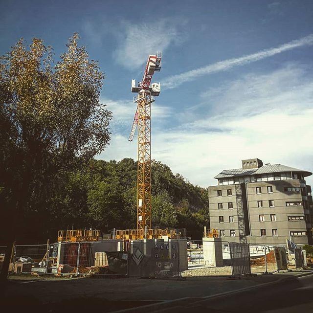 #grevenmacher #luxemburg #europe #crane #cranlife #guestcrane #gönnung #yellowcrane pic.twitter.com/D1P2nRXfvq