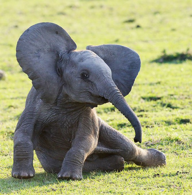 #WorldElephantDay #WeltElefantenTag Draw me like one of your French Elephants 💕 Photo