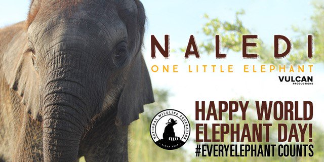This #WorldElephantDay, join us in celebrating #EveryElephant Counts contest winner Ben Radke! Ben recently returned from an all-expense-paid trip to Botswana to meet Naledi, the famous orphaned elephant. Learn about this young conservationists journey: bit.ly/2KNK1QW