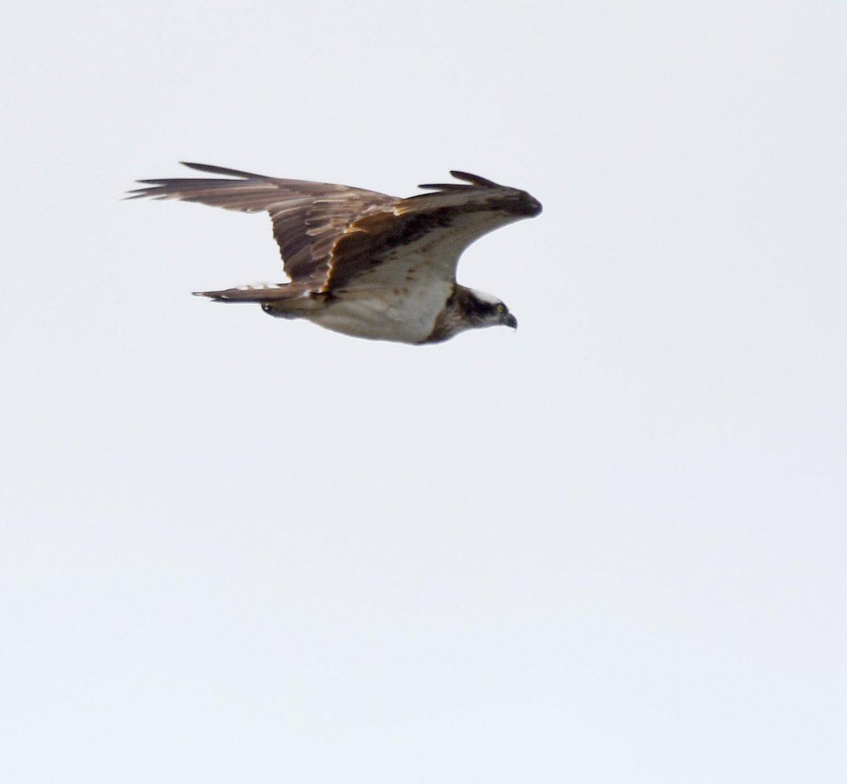 osprey dk
