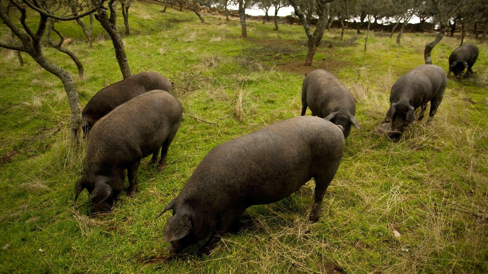 Wow, Spain sure has a lot of pigs https://t.co/rKqzTGwijk https://t.co/SBId0XywuD
