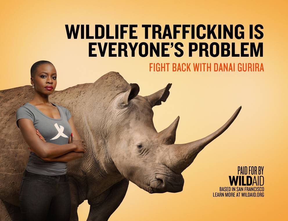 Future generations may watch #BlackPanther and see an #extinct animal if we don't protect #rhinos today. #WildlifeTrafficking is everyone&#39;s problem. We have the power to save them from extinction. #PoachingStealsFromUsAll #RhinosForever  Get informed:  http:// bit.ly/rhinoswa  &nbsp;  <br>http://pic.twitter.com/B6CMByI1u3