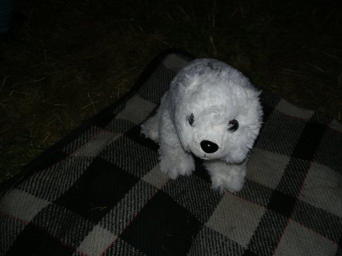 Meine Freundin hat mir einen Eisbär gefangen 😍 Perfekter Abschluss eines geilen Festivals! #eisbrecher #mera18 Foto