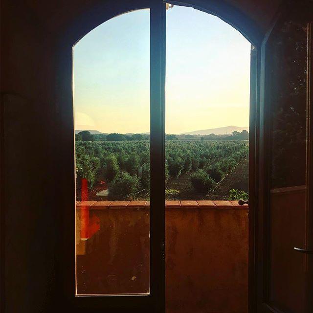 Benvenuto raggio di sole #stunning #toscana #maremma #meraviglia #bolgheri https://ift.tt/2MiLvaF  - Ukustom