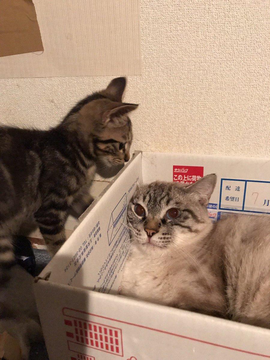 目猫カラス@絵仕事募集中さんの投稿画像