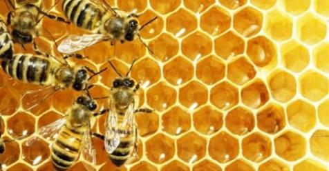 Le api italiane producono sempre meno miele: a rischio la produzione  https://t.co/HXgieR9Vwx