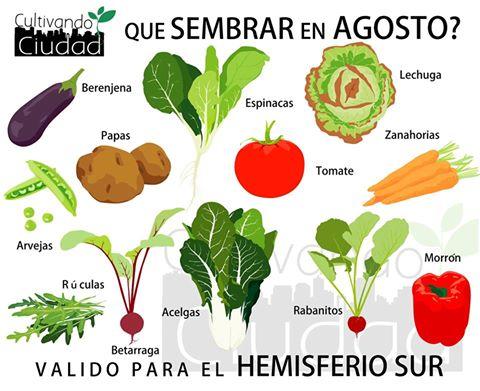 Muy buenos días amigos, a continuación les dejamos información de las verduras que se pueden plantar en el mes de agosto, que tengan una excelente semana :).@Transforma_CL https://t.co/FGCbzJNJp3
