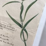 Love stumbling across old letters and drawings with #herbarium specimens. Always reminds me of the rich context behind each collection, and makes me realize just how much culture is stored alongside all the science!