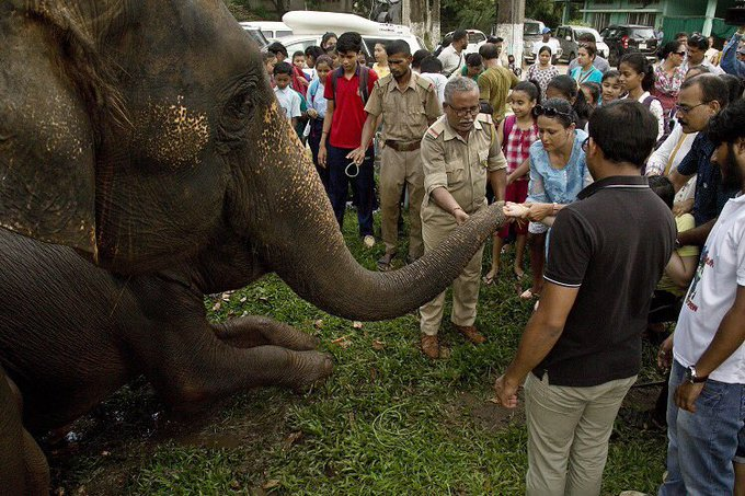 World Elephant Day: Large-scale poaching and ivory trade remain biggest threat #WorldElephantDay Photo