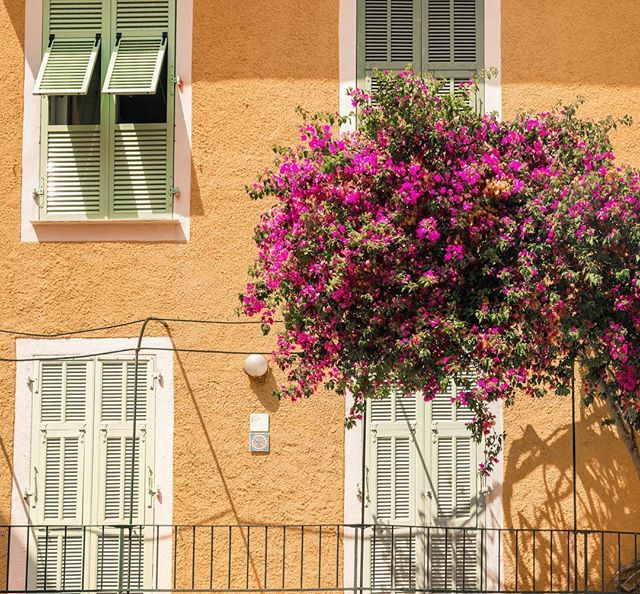 Dreaming of colorful and sunny landscapes adorned with flowers on this gloomy Monday morning. . . . . #myvillefranchesurmer #villefranche #villefranchesurmer #cotedazurfrance #travelcommunity #jastravs #travelagent <br>http://pic.twitter.com/eyL8i4MwCI
