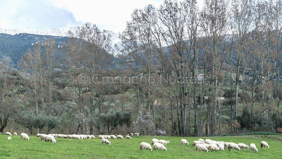 Tertenia: esclusa la blu tongue per le pecore morte nei giorni scorsi.... #linguablu #blutonge #pascoli  http:// www.cronachenuoresi.it/2018/08/13/tertenia-esclusa-la-blu-tonge-per-le-pecore-morte-nei-giorni-scorsitertenia-esclusa-la-blu-tonge-per-le-pecore-morte-nei-giorni-scorsi/  - Ukustom