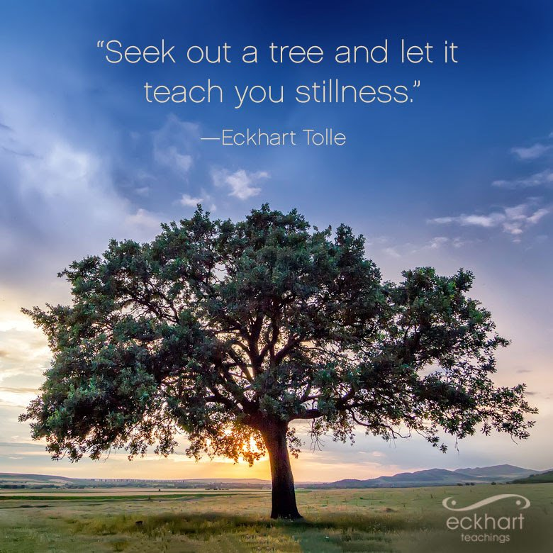 Image result for seek out a tree and let it teach you stillness tolle