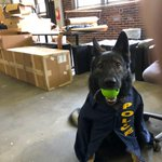 Image for the Tweet beginning: Our K9 Niko couldn't be