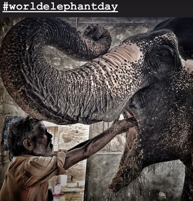 A picture of elephant clicked on #WorldElephantDay by Photojournalist Ravi chaudhary Photo