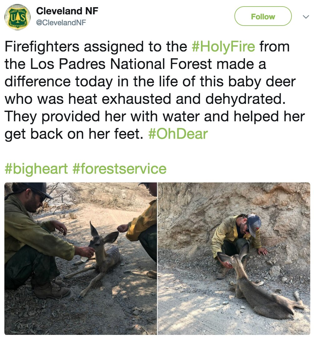 Firefighters working the #HolyFire raging in Southern California's Cleveland National Forest took time to help out a dehydrated deer.   The massive wildfire was 41% contained as of Sunday afternoon after burning across more than 35.5 square miles. https://t.co/x9tKrmMuyt
