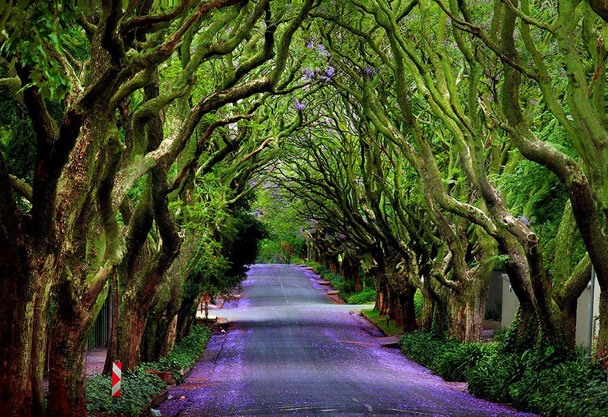 Extremely perfect tree pathway. <br>http://pic.twitter.com/3vXLCcVIYT