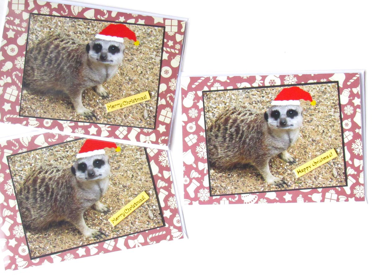 Happy day to everyone today  make it a fab one. Have you seen our brilliant brand new #meerkat Christmas cards by young photographer, daughter &amp; team member  available in our @Etsy shop now   http://www. biscuitbarrelcrafts.etsy.com  &nbsp;     #TheCraftersUK #supportsmallbusiness #shopindie<br>http://pic.twitter.com/PcaOVZWqPF