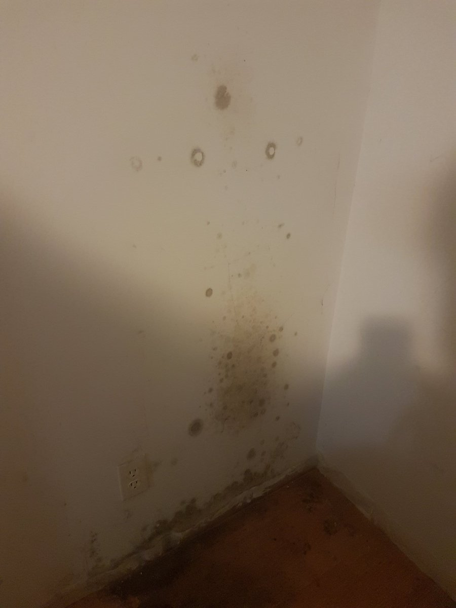 Blackmold Mold Healthadvice Advice Help Anyone Know How To Take Care Of In A Wall Found This Behind My Fridge Pic Twitter Vehevvj3gg