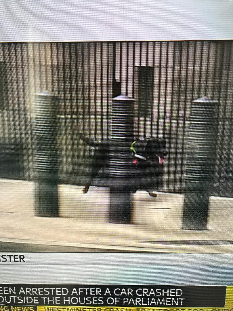 Let's hear it for all the emergency services responding to this morning's incident in Westminster, including this counter-terror good boy leading the way in Whitehall