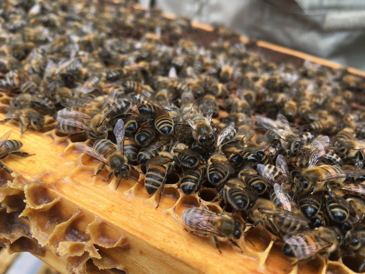Arnaud Montebourg vient de lancer sa propre marque de miel. Nicolas Laudoueineix, apiculteur à Linards a été séduit par le projet. https://france3-regions.francetvinfo.fr/nouvelle-aquitaine/haute-vienne/apiculteur-linards-integre-projet-bleu-blanc-ruche-lance-arnaud-montebourg-1526160.html  - FestivalFocus