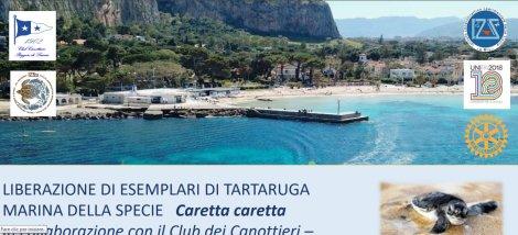 Quattro trtarughe Caretta caretta verso la liberazione sulla spiaggia di Mondello - https://t.co/r08DBHTqdg #blogsicilianotizie