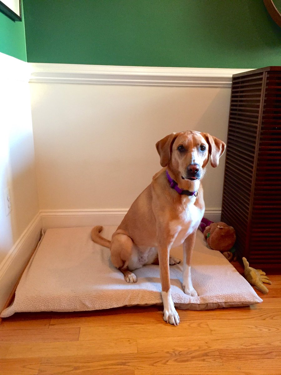 Amy Kelley On Twitter My Old Memory Foam Mattress Topper Was Cracked And Had Seen Better Days But Part Of It Found New Life As My Dog S New Bed And She Loves