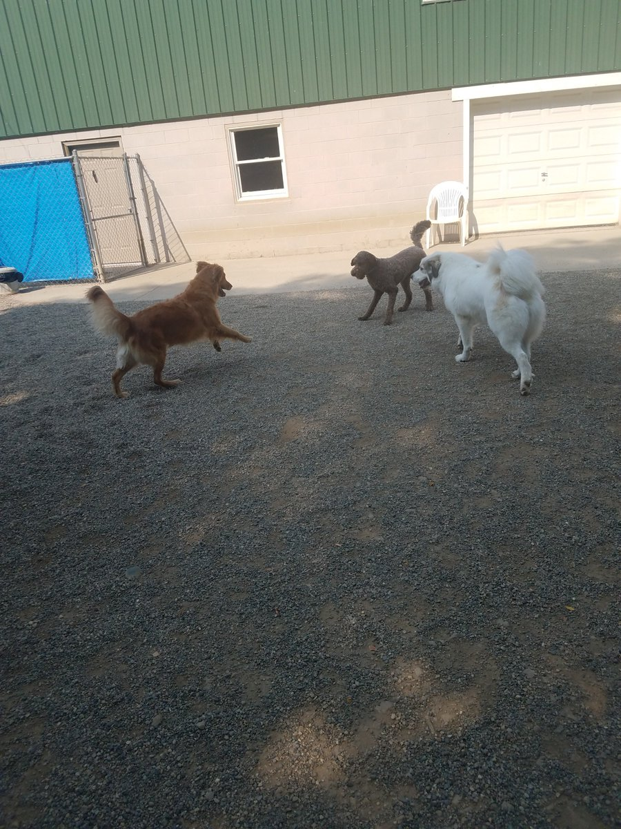 Maggie Mae races in to play with Mocha and Gerdi