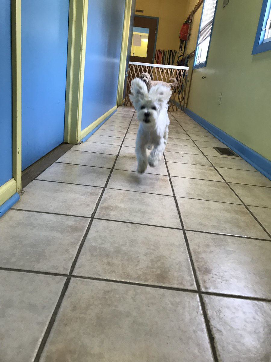 Cooper D. watches Tucker R. fly down the hallway