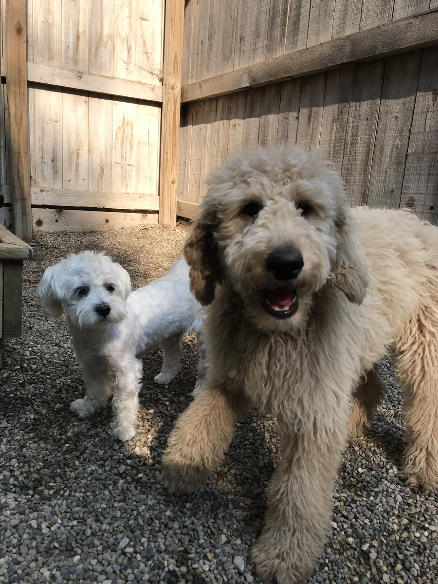 Cooper D. and Tucker R. pose for a picture