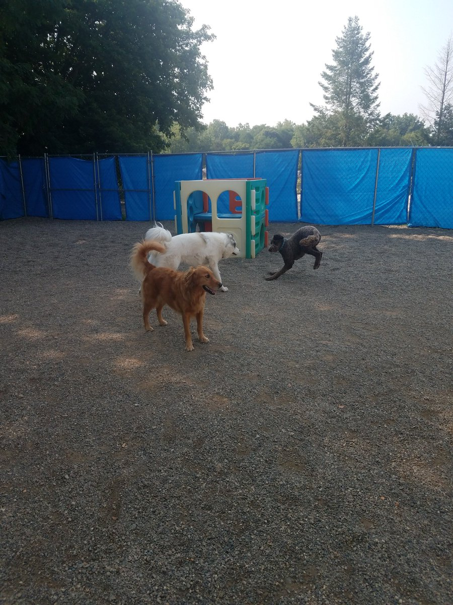 Mocha, Maggie Mae and Gerdi love playing together at Bark Town
