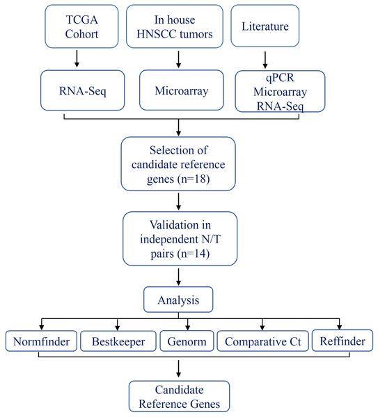 ebook diagnostics of vascular diseases