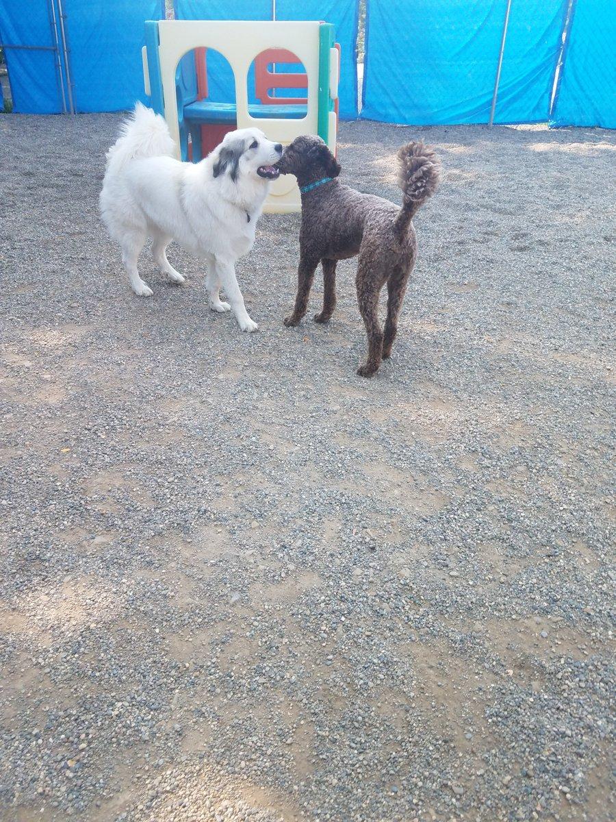 Gerdi tells Mocha a secret