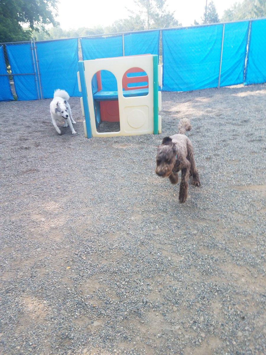 Mocha gets Gerdi to chase her