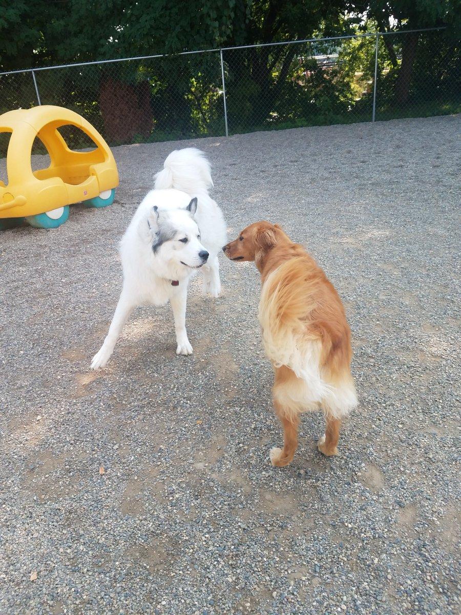 "Gerdi says ""Follow me Maggie Mae!"""
