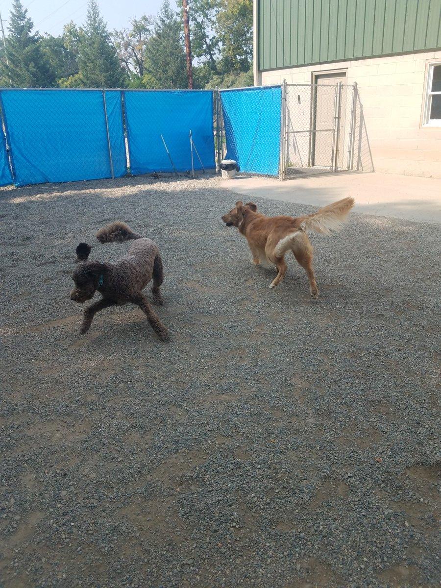 Mocha and Maggie Mae fly around the yard