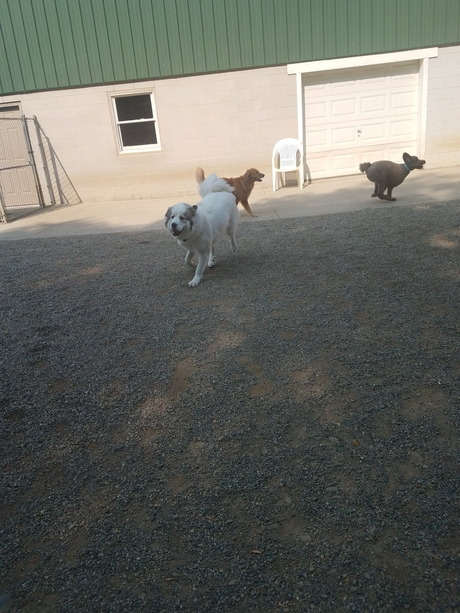 Gerdi, Mocha and Maggie Mae race around the yard