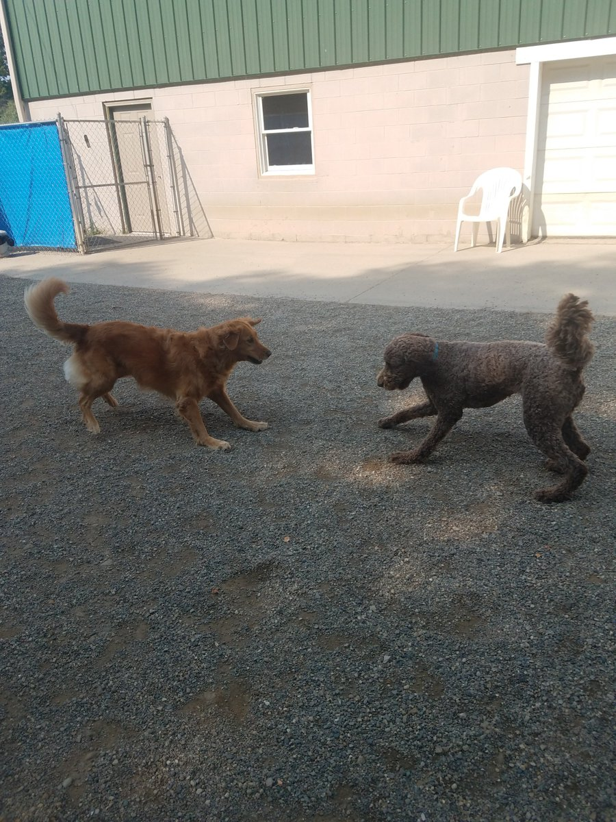 Mocha and Maggie Mae get ready to play