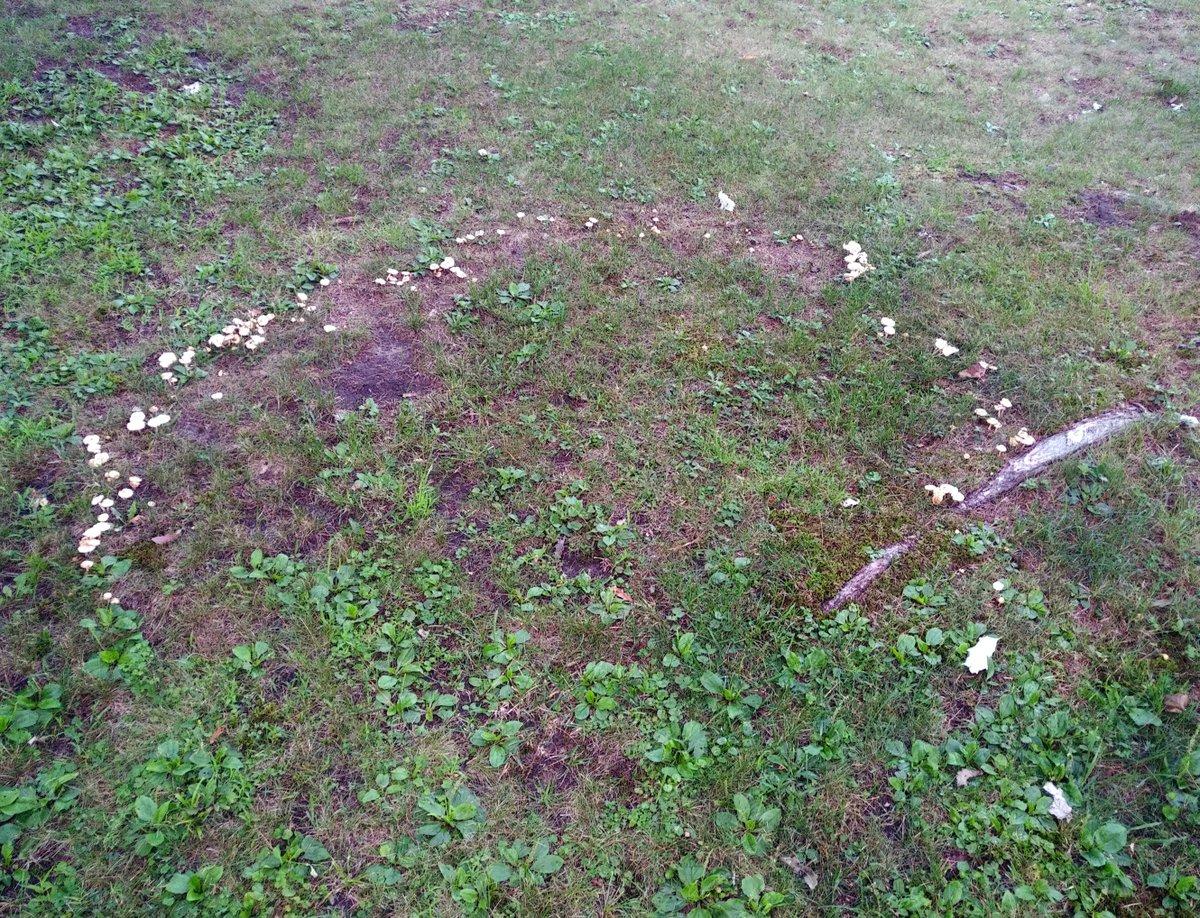 These mushrooms remember something long-forgotten.