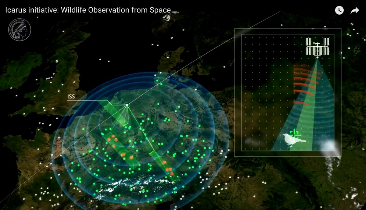 Insane. Revolutionary, global, and intelligent internet of animal movement from space  https://www. youtube.com/watch?v=e_KNyh QMjOY&amp;feature=youtu.be &nbsp; …  @animaltracking @martinwikelski #ICARUSinitiative<br>http://pic.twitter.com/FbTOEJbVlL