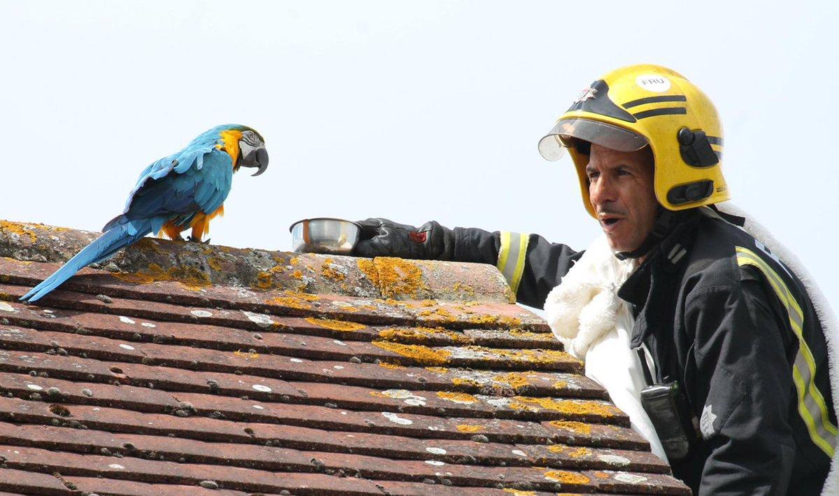 Bombeiros resgatam papagaia 'boca-suja' em Londres https://t.co/Zd0YFUWdD4 #PlanetaBizarro #G1