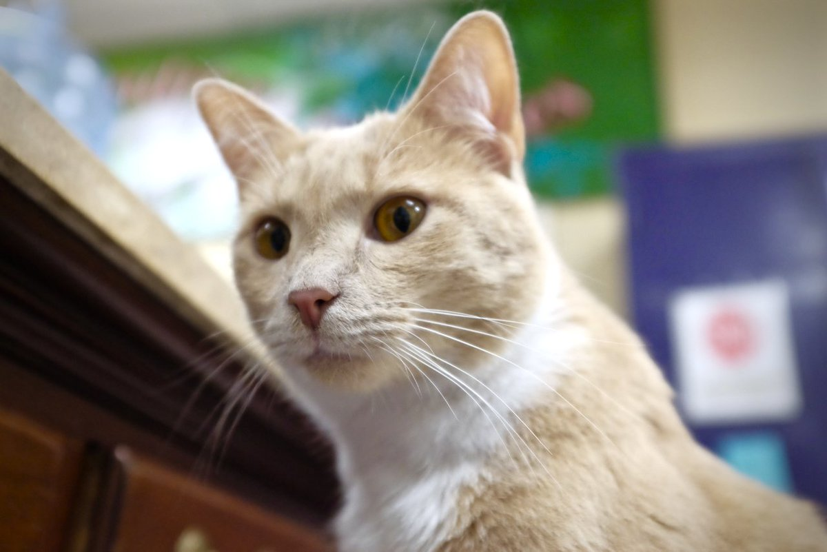 #HelpAidenTheCat by following him you give $2 to his non profit no kill cat shelter. A sponsor has pledged $2 a follower through labor day. <br>http://pic.twitter.com/vtCm9abO89