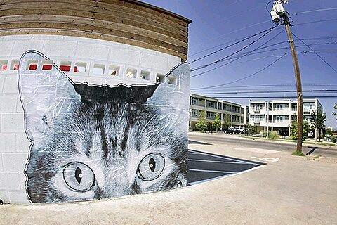 @franz_332 Un gatto che decide di non farsi trovare può piegare se stesso come un fazzoletto, se vuole.Louis J. Camuti#PerleDiPensiero #ScrivoArte  #StreetArt #Cats   - Ukustom