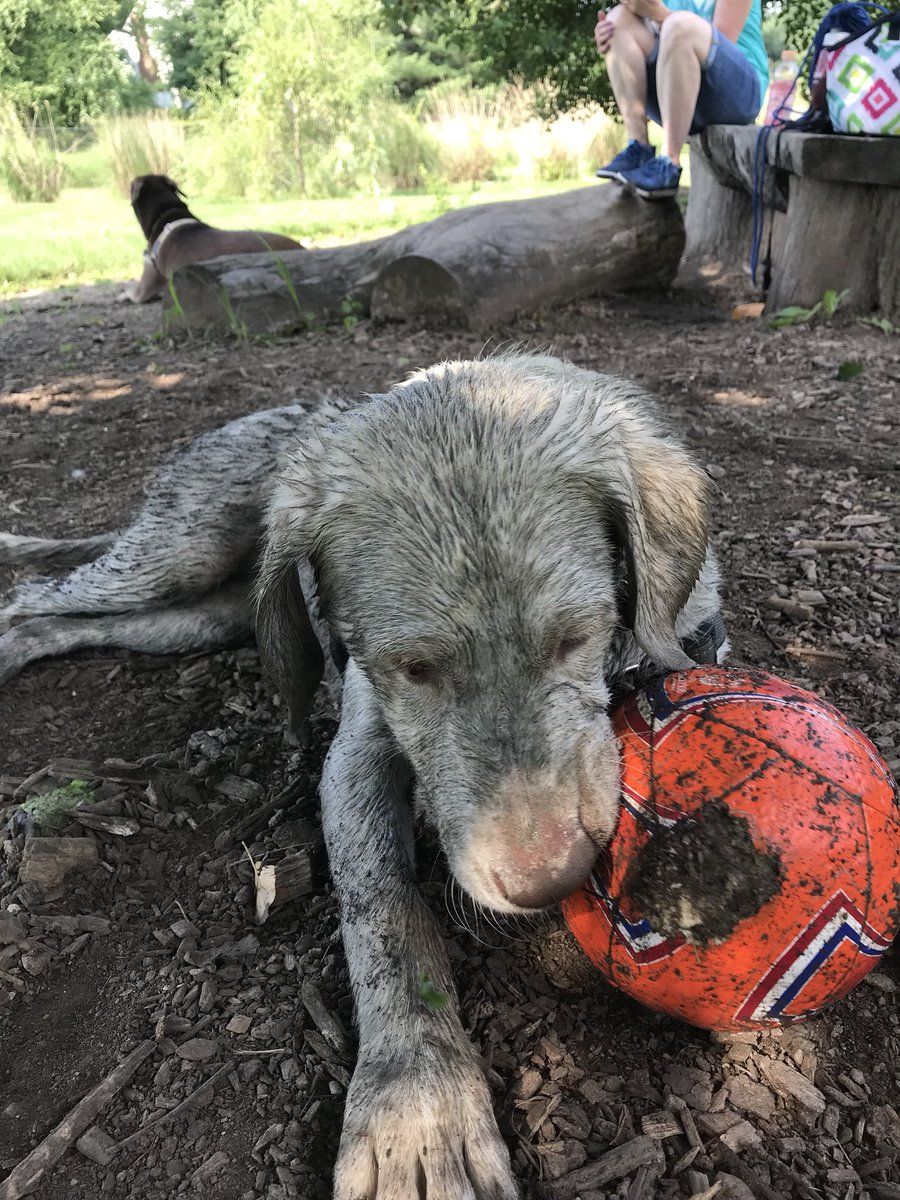 I entered a contest for the dirtiest dog.  I LOVE to get dirty.  You can vote here:  http:// thedrpol.com/needfoamcare/  &nbsp;   once a day if you agree that I'm the dirtiest pet!!  Here's a peek of the photo I submitted.  Thanks for your votes.  #DrPol #farmlife #TuesdayMorning #AdoptDontShop<br>http://pic.twitter.com/ag9s6Jcn63