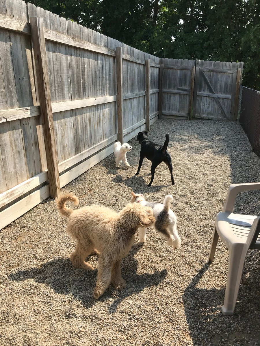 Tucker R., Tyrus, Cooper D. and Haley love playing at Bark Town