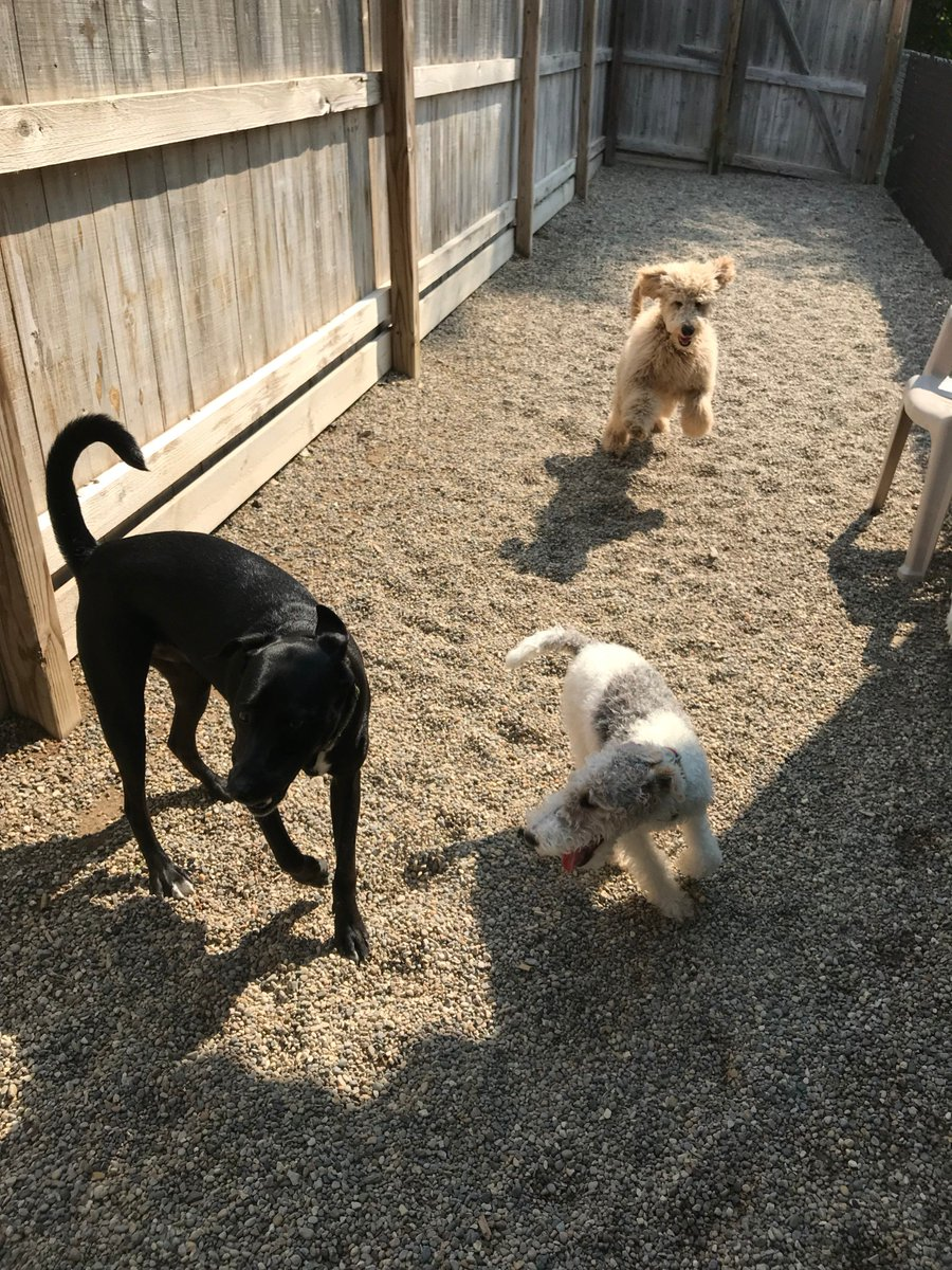 Cooper D. races in to play with Tyrus and Haley