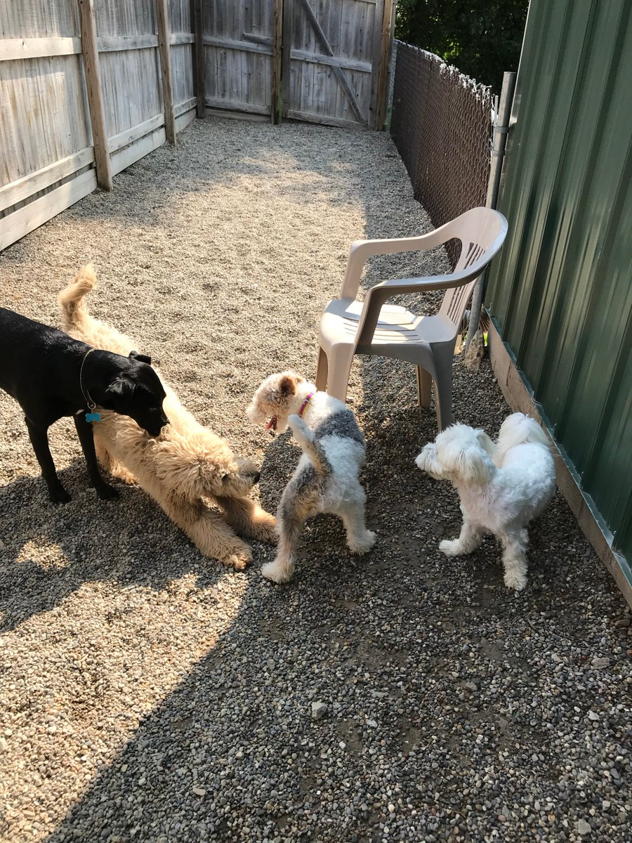 Tyrus and Cooper D. ask Haley and Tucker R. to play